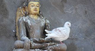 Buddhist dove_photo by Marzenna Jakubczak
